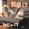 pet_onsen_eyecatch