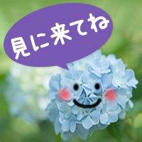 ajisai_eye