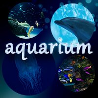 aquarium_eye