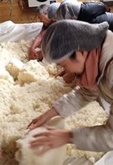 麹菌をまぶしまんべんなく均一に広げる作業