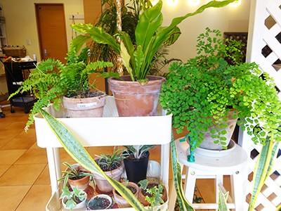 店内の観葉植物